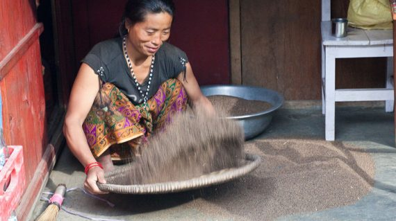Woman preparing millet for making raksi (Nepalese whiskey)